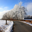 Winter country lane — Stock Photo