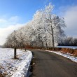 Stock Photo: Winter country lane