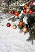 在雪中的天然圣诞树 — 图库照片