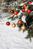 Natural Christmas tree in snow — Stock Photo