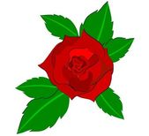 Illustration of a red rose — Stock Photo