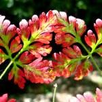 Vivid autumn colors — Stock Photo #1844145