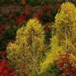 Vivid autumn colors — Stock Photo #1844542