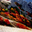 Stock Photo: Vivid autumn colors