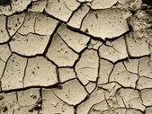 Cracked ground,a global warming concept — Stock Photo