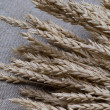 Close up of wheat — Stock Photo #1875723