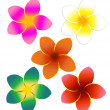Five Colorful Plumeria Flowers - Stock Photo