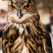 Eagle or Horned Owl — Stock Photo