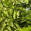 Stock Photo: Backlit Foliage