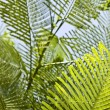 Fern Leaves — Stockfoto