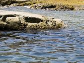 Coastal Rocks — Stock Photo