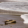 Stock Photo: Washed Ashore