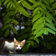 Shy Kitten — Stockfoto