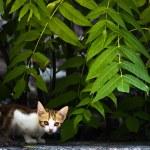 Shy Kitten — Stock Photo #2375736