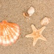 Cockleshells on sea sand — 图库照片