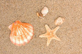 Cockleshells on sea sand — Stock Photo