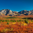 Alaska Denali National Park in autumn - Stock Photo