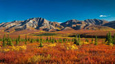 Alaska Denali National Park in autumn — 图库照片