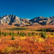 Denali National Park in autumn — Стоковое фото