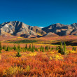 Denali National Park in autumn - Stock Photo