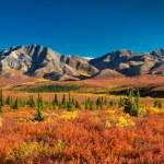 Parque Nacional de Denali en otoño — Foto de Stock