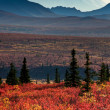 Mt McKinley with red autumn tundra — Stock Photo