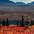 Mt McKinley with red autumn tundra - Stock Photo