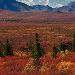 Denali-Nationalpark-Mt Mckinley — Stockfoto