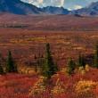 Denali National Park Mt McKinley — Stock Photo