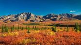 Denali National Park in autumn — Stock Photo