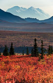 Mt McKinley with red autumn tundra — 图库照片