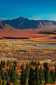 Denali National Park in autumn — Foto Stock
