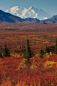 Denali National Park Mt McKinley — Стоковое фото