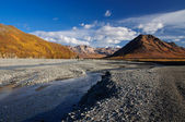 Denali National Park Toklat River — Stock Photo