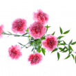 ������, ������: Flower vase