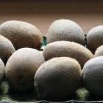 Kiwi — Stock Photo #1849203