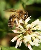 Wasp — Stock Photo