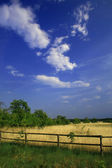 Summer countryside landscape — Stock Photo