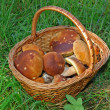 Basket with mushrooms — Stock Photo #1955430