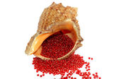 Seashell with red beads on a white — Stock Photo