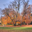 Autumn in the park — Stock Photo