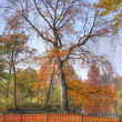 Autumn in the park — Foto Stock