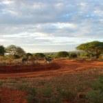 Sunrise in the savanna — Stock Photo