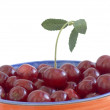 Ripe sweet cherry — Stockfoto