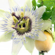 Close up of passiflora — Stock Photo