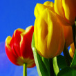 Tulips — Stock Photo #1865125