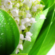 Lily-of-the-valley — Stock Photo #1866314