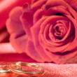 Rings and rose — Stock Photo