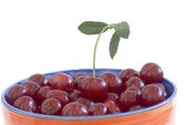 Ripe sweet cherry — Stock Photo