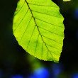 Close up of green leaves — Stock Photo #1871781
